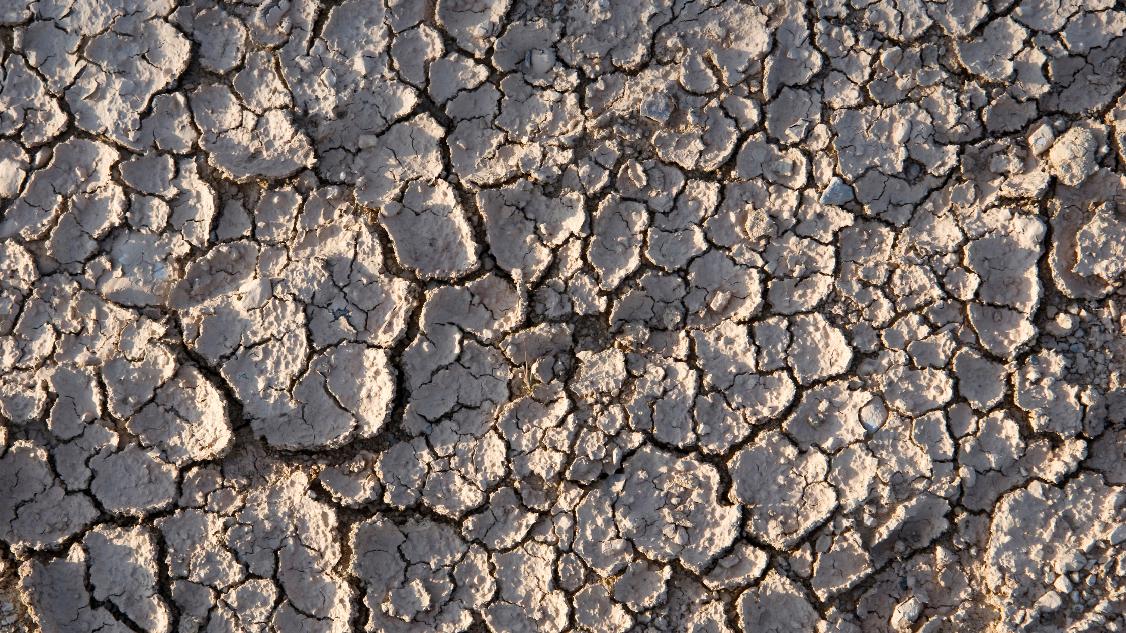 Dry Weather Can Cause Issues for Your Foundation