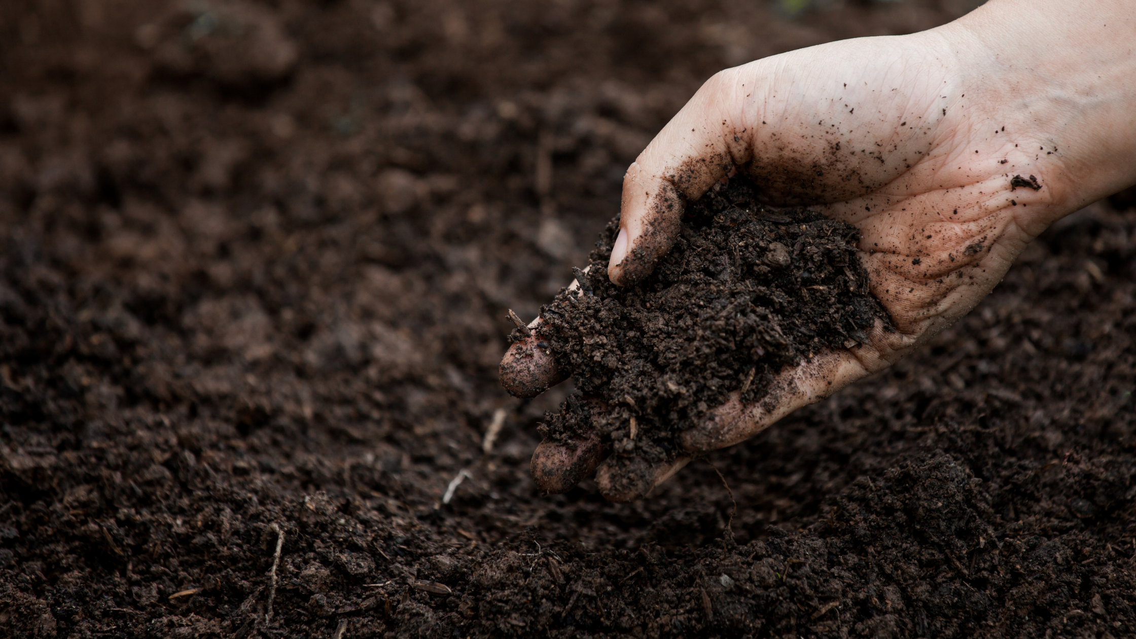 Healthy Soil Is Great for Your Yard and Home