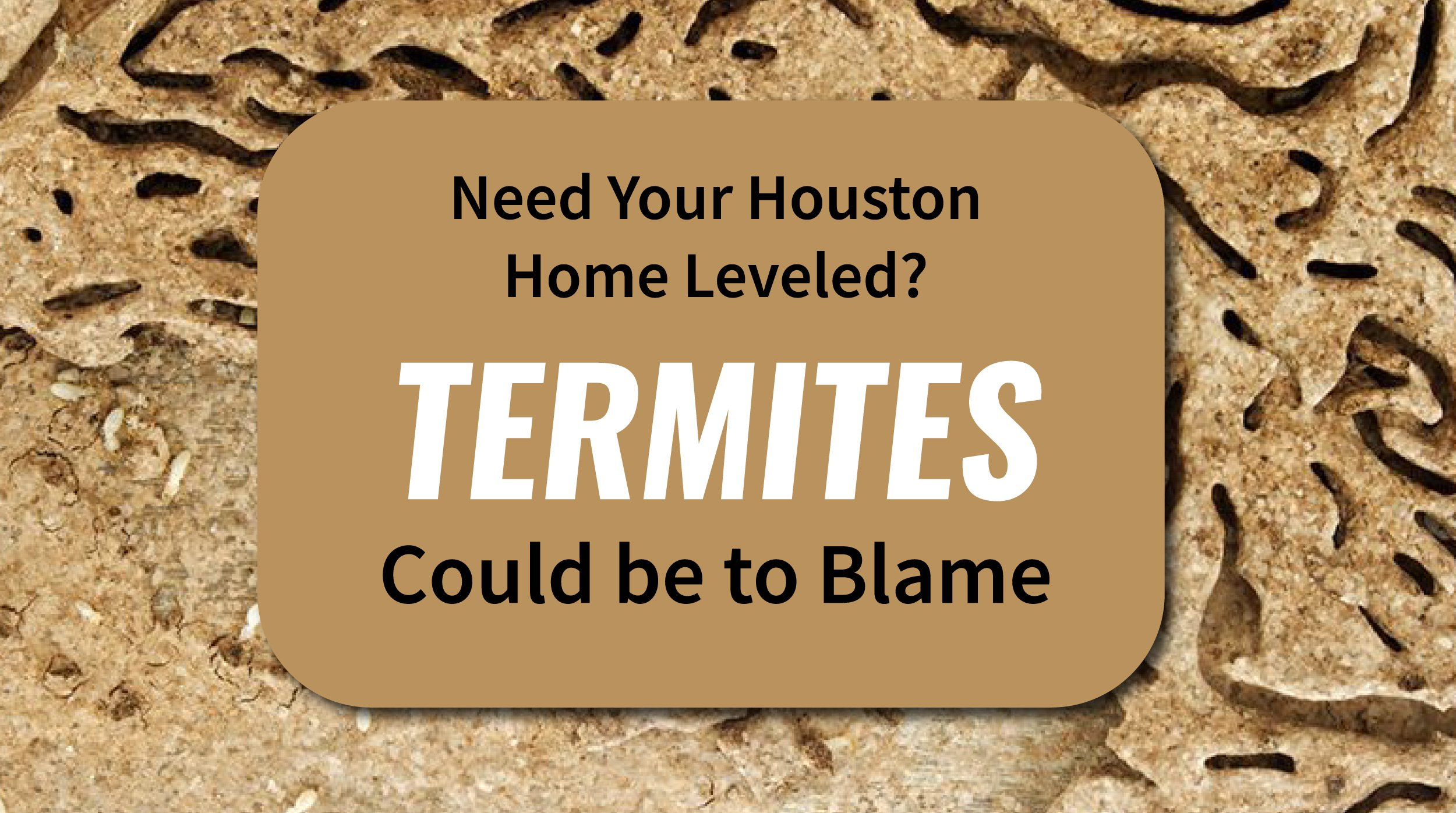 Need Your Houston Home Leveled? Termites Could be to Blame