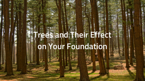 Trees and Their Effect on Your Foundation