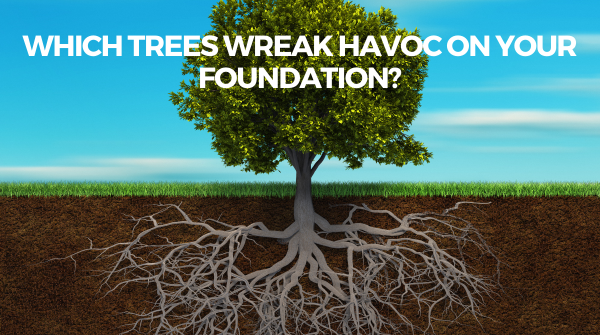 Which Trees Wreak Havoc on Your Foundation?